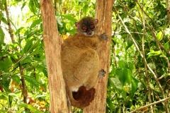 reserve-lokobe-excursion-nosybe
